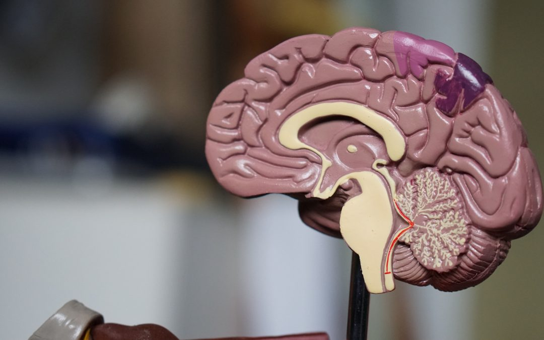 The Early Science of Brain Health